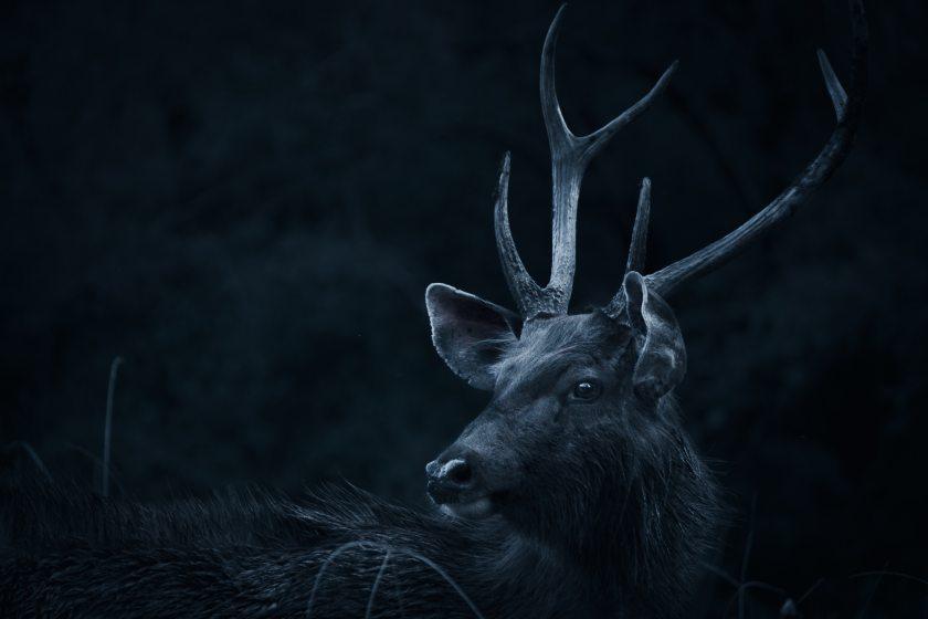 animal-animal-photography-antlers-2302802